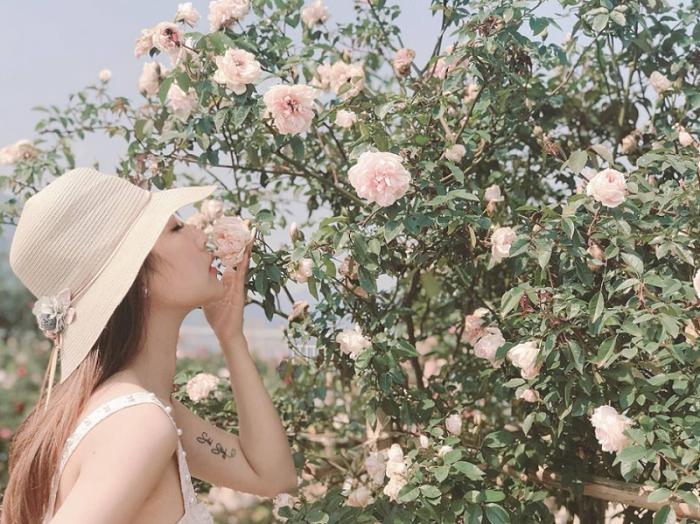 Thung lũng hoa hồng lớn nhất Việt Nam tại Sa Pa