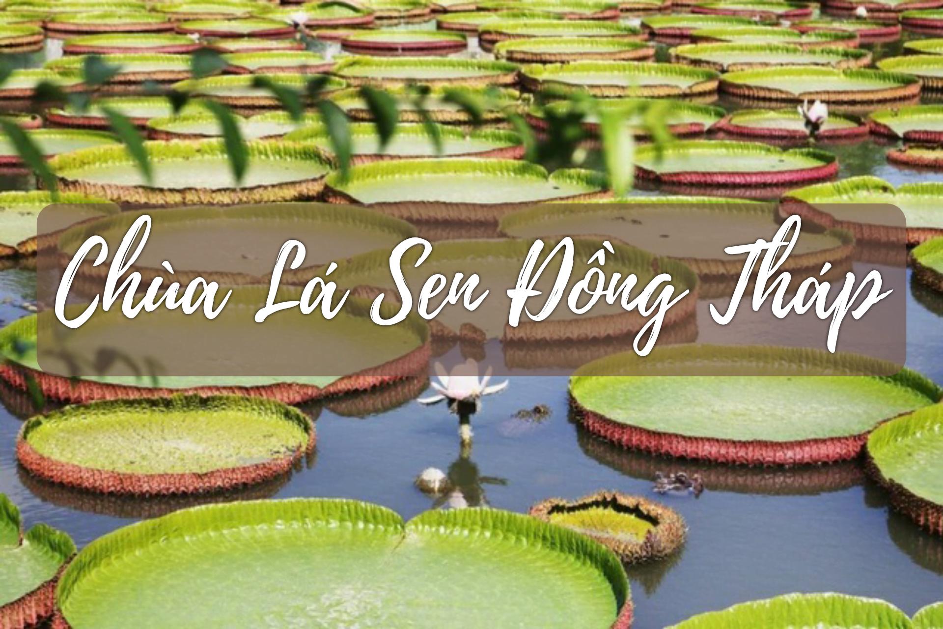 Hồ Chí Minh - Chùa Lá Sen Khổng Lồ - Vườn Chà Là - Cánh Đồng Hoa Hồng - Cá Lóc Bay - Chùa Phật Ngọc Xá Lợi 1 ngày